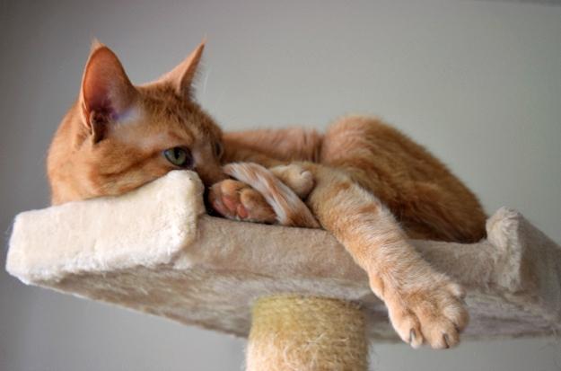 Meet Marley, the Pirate Cat | DoYouEvenPaleo.net
