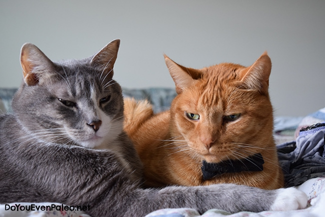 Loki and Marley - The Kitty Committee | DoYouEvenPaleo.net