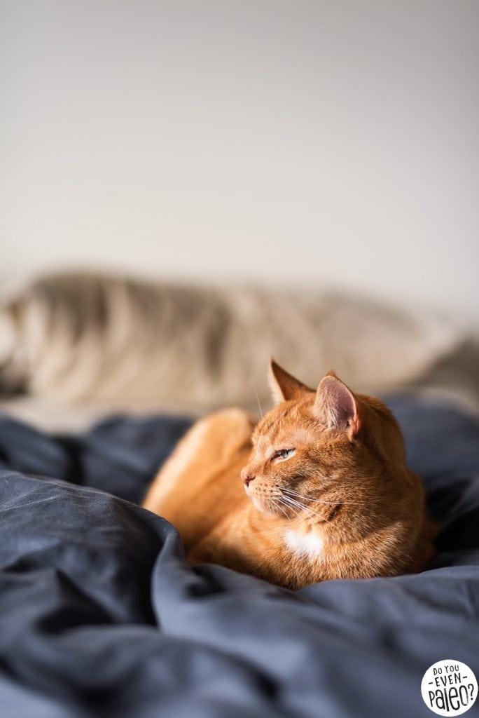 Orange cat sleeping on a navy bedspread