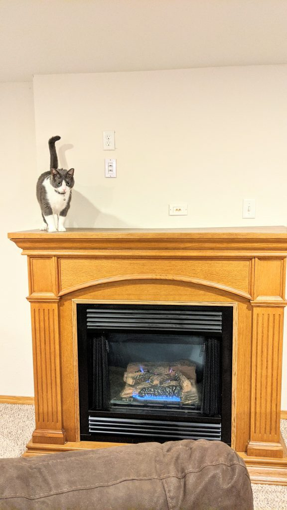 Cat on top of a gas fireplace