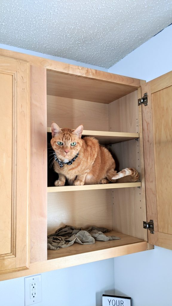 A cat in an empty cupboard