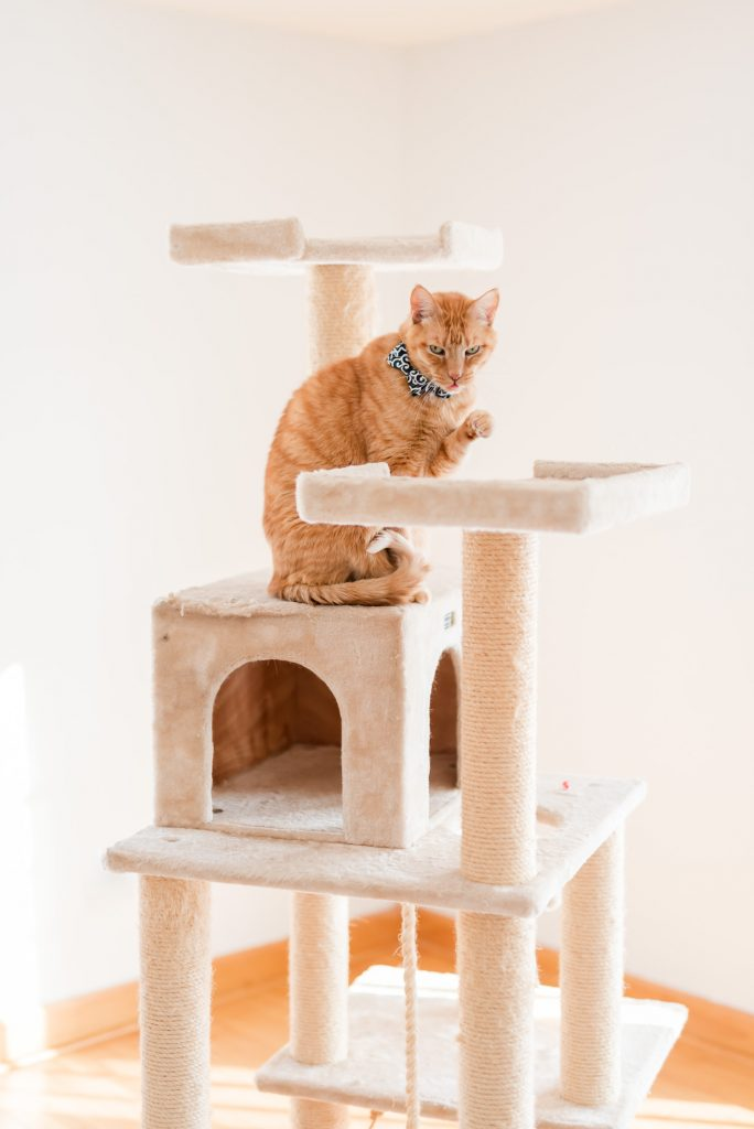 Orange cat on a large cat tree