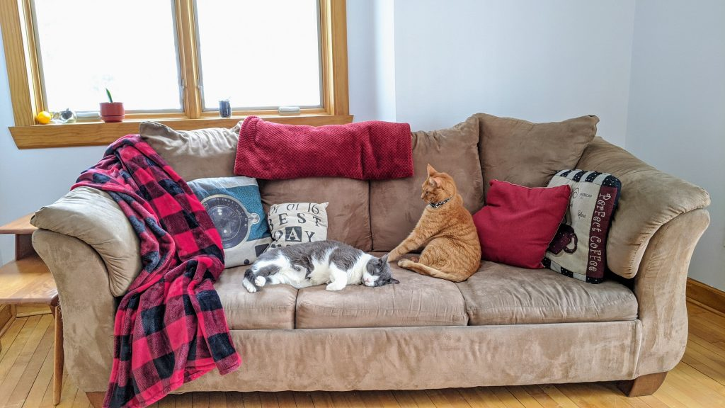 Cats on a brown couch