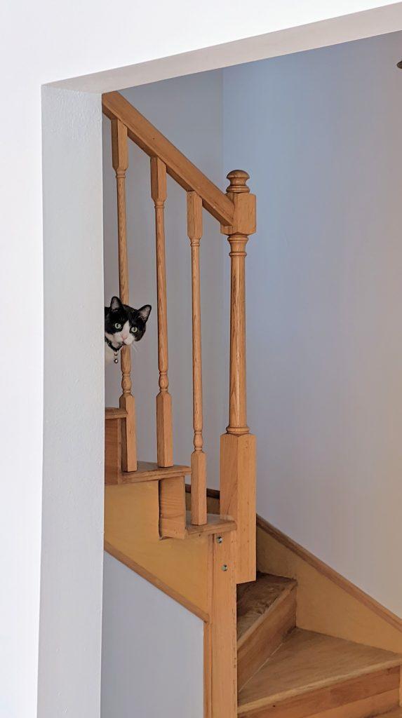 Cat peeking through the railing of a staircase