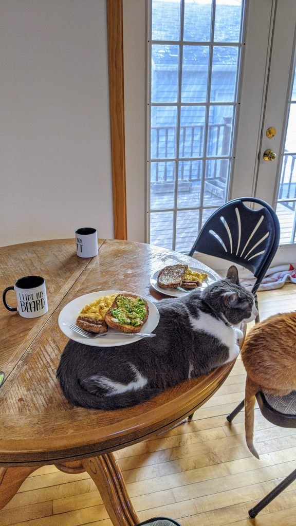 Cat on a table with a plate of food balanced on his back