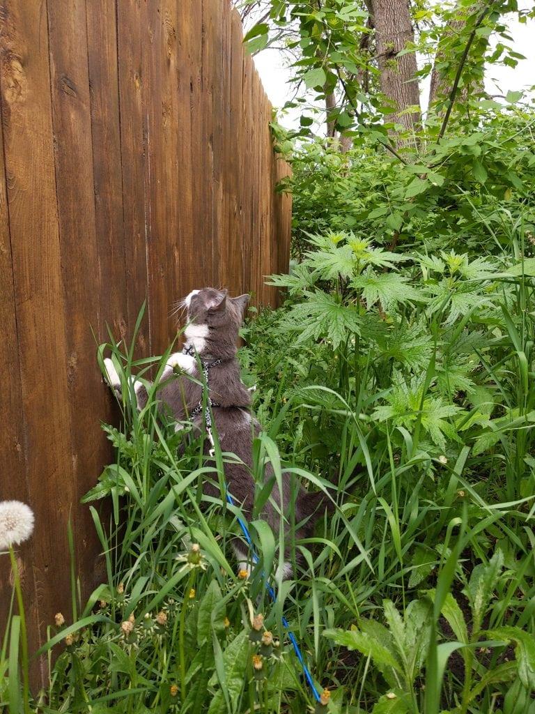 Cat exploring overgrown weeds